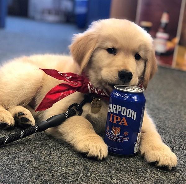 Pet - Dog - ER, LOVE LIFE ARPOON IPA LORAL CRIS TALE ALE NDVOR,VT