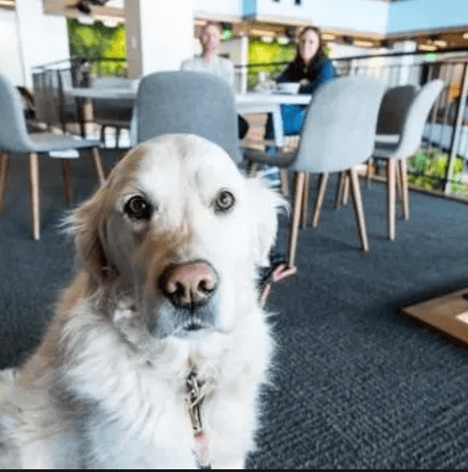 Pet at work