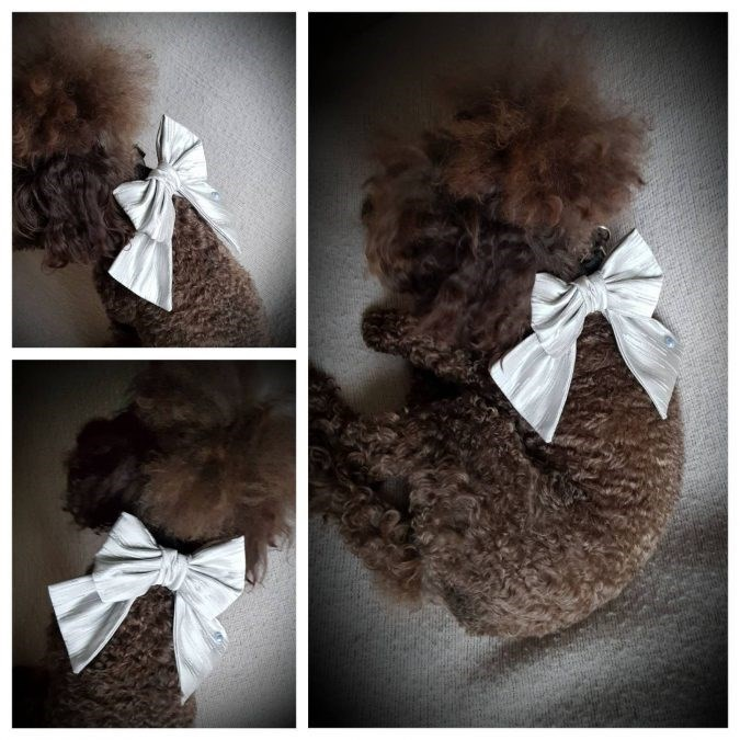dog wedding outfits - Bow tie