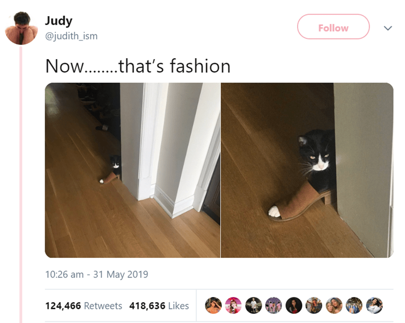 Product - Judy Follow @judith_ism Now...that's fashion 10:26 am 31 May 2019 124,466 Retweets 418,636 Likes