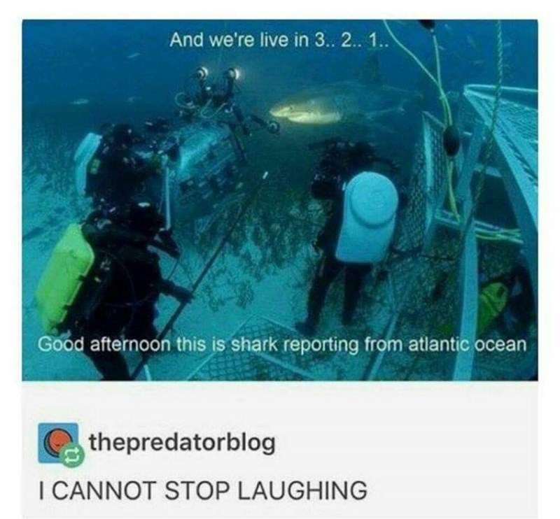 wholesome memes - Organism - And we're live in 3.. 2.. 1. Good afternoon this is shark reporting from atlantic ocean thepredatorblog I CANNOT STOP LAUGHING