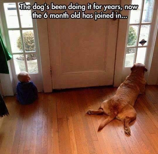 wholesome memes - Floor - The dog's been doing it for years, now the 6 month ald has joined in...