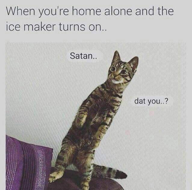 wholesome memes - Cat - When you're home alone and the ice maker turns on.. Satan.. dat you..? afuckitimarobe