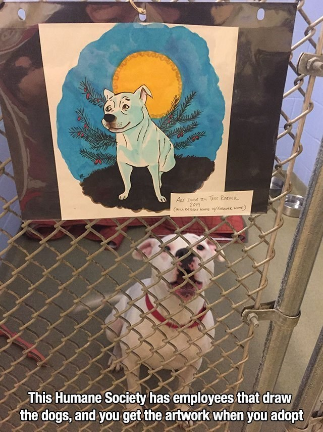 wholesome memes - Canidae - Aur Dune t Tess ReeveR 2019 (w oeseer Hame facevet Hm This Humane Society has employees that draw the dogs, and you get the artwork when you adopt