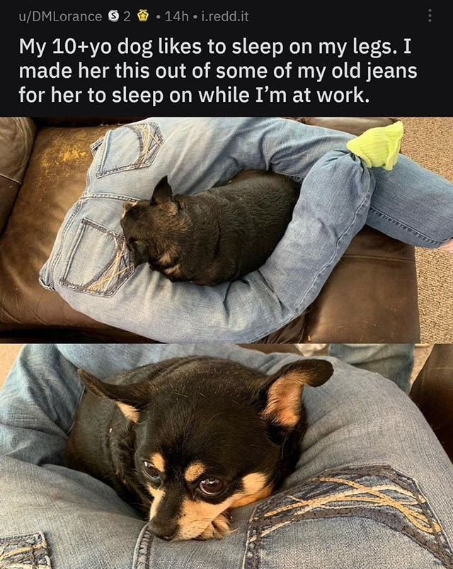 wholesome memes - Canidae - 14h i.redd.it u/DMLorance 2 My 10+yo dog likes to sleep on my legs. I made her this out of some of my old jeans for her to sleep on while I'm at work.