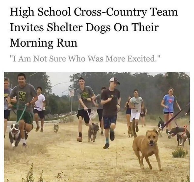 """wholesome memes - Cani cross - High School Cross-Country Team Invites Shelter Dogs On Their Morning Run """"I Am Not Sure Who Was More Excited."""""""