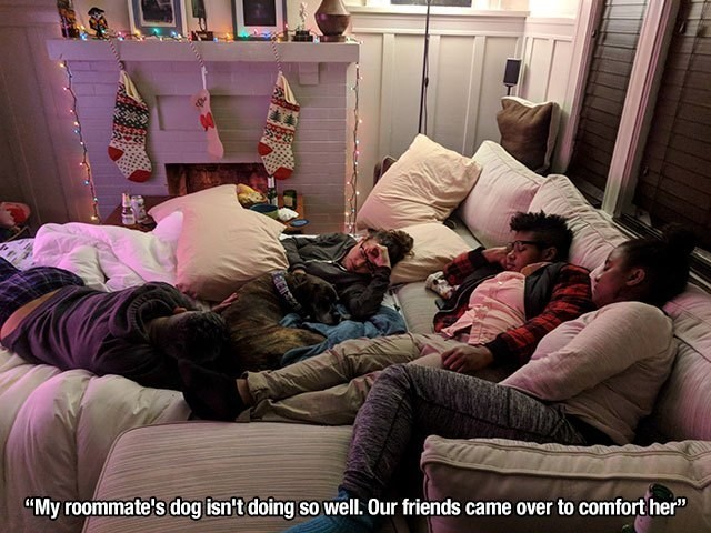 """wholesome memes - Couch - """"My roommate's dog isn't doing so well. Our friends came over to comforther"""""""