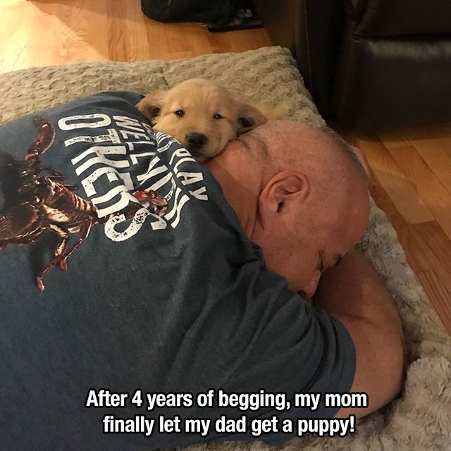 wholesome memes - Canidae - After 4 years of begging, my mom finally let my dad get a puppy! AY OFRES
