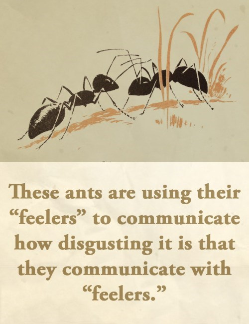 """animal facts - Carpenter ant - These ants are using their """"feelers"""" to communicate how disgusting it is that they communicate with """"feelers."""""""