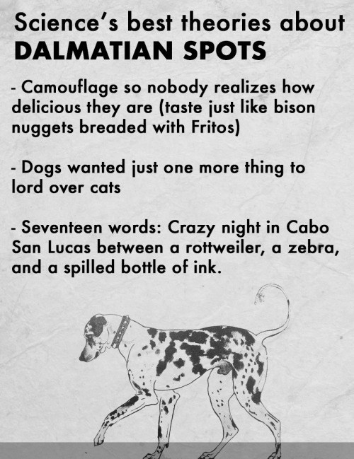 animal facts - Vertebrate - Science's best theories about DALMATIAN SPOTS - Camouflage so nobody realizes how delicious they are (taste just like bison nuggets breaded with Fritos) - Dogs wanted just one more thing to lord over cats - Seventeen words: Crazy night in Cabo San Lucas between a rottweiler, a zebra, and a spilled bottle of ink.