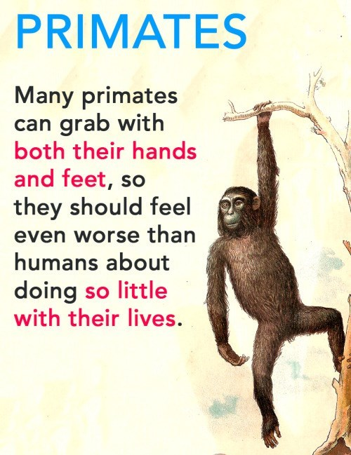 animal facts - Primate - PRIMATES Many primates can grab with both their hands and feet, so they should feel even worse than humans about doing so little with their lives