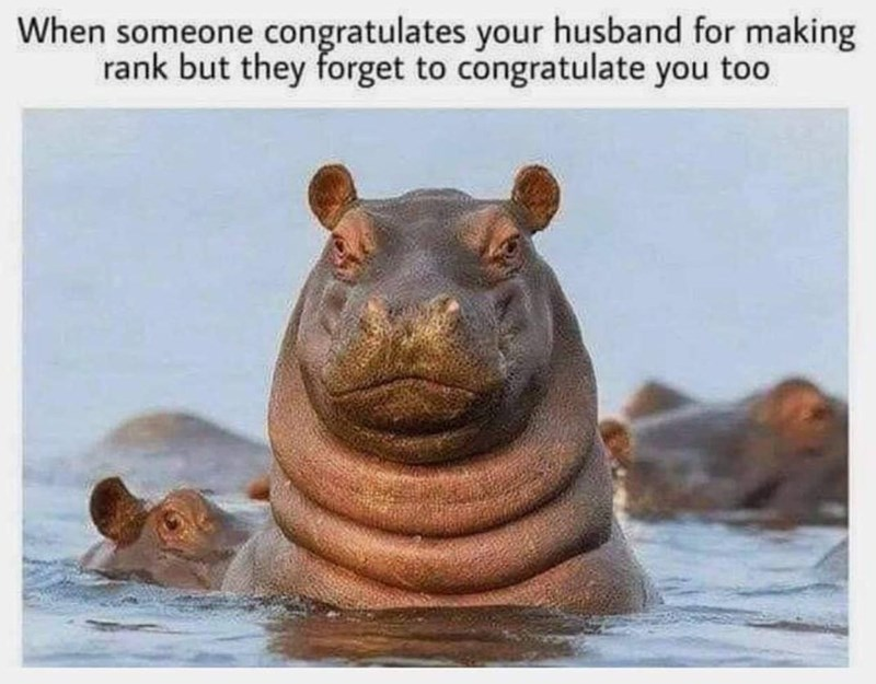 military memes - Adaptation - When someone congratulates your husband for making rank but they forget to congratulate you too