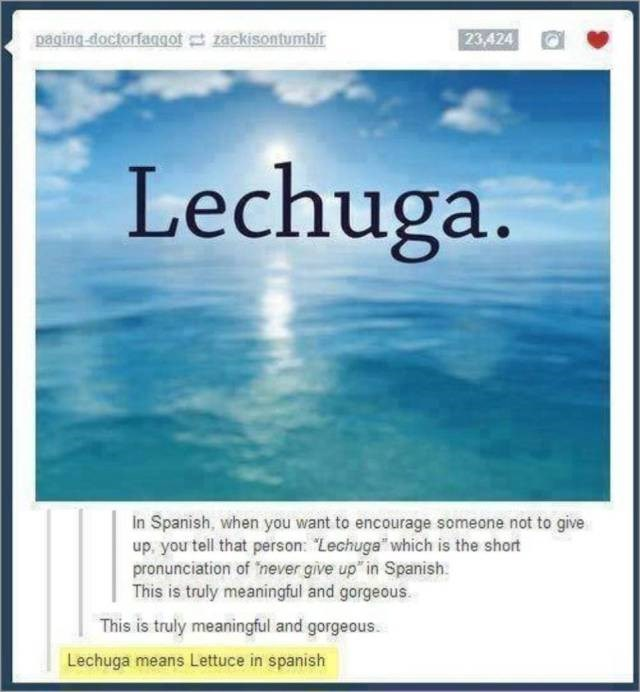 """Text - paging doctorfaqgot zackisontumblr 23,424 Lechuga. in Spanish, when you want to encourage someone not to give up, you tell that person: """"Lechuga which is the short pronunciation of 'never give up in Spanish This is truly meaningful and gorgeous This is truly meaningful and gorgeous. Lechuga means Lettuce in spanish"""