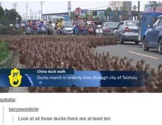 joke - Transport - China duck walk jn' Ducks march in orderly lines through city of Taizhou epikalia: kanyewesticle: Look at all those ducks there are at least ten