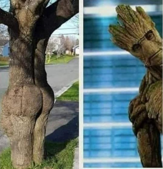 Funny random meme featuring Groot