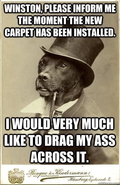 Funny random meme - dog