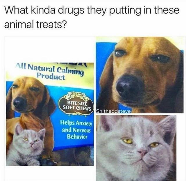 """Funny random meme that says, """"What kinda drugs they putting in these animal treats?"""""""