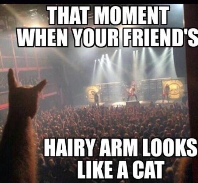 Sky - THAT MOMENT WHEN YOUR FRIEND'S HAIRY ARM LOOKS LIKE A CAT