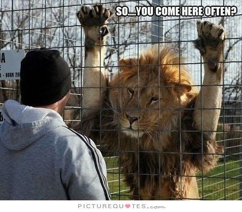 lion meme joking that the mighty beast is making small talk with the visitors