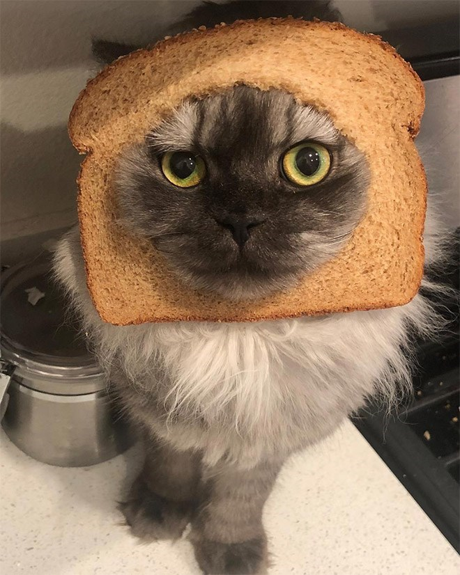 pic of a cat with its face breaded
