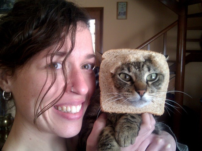 cat breading - pic of woman posing with cat with its head in a piece of bread