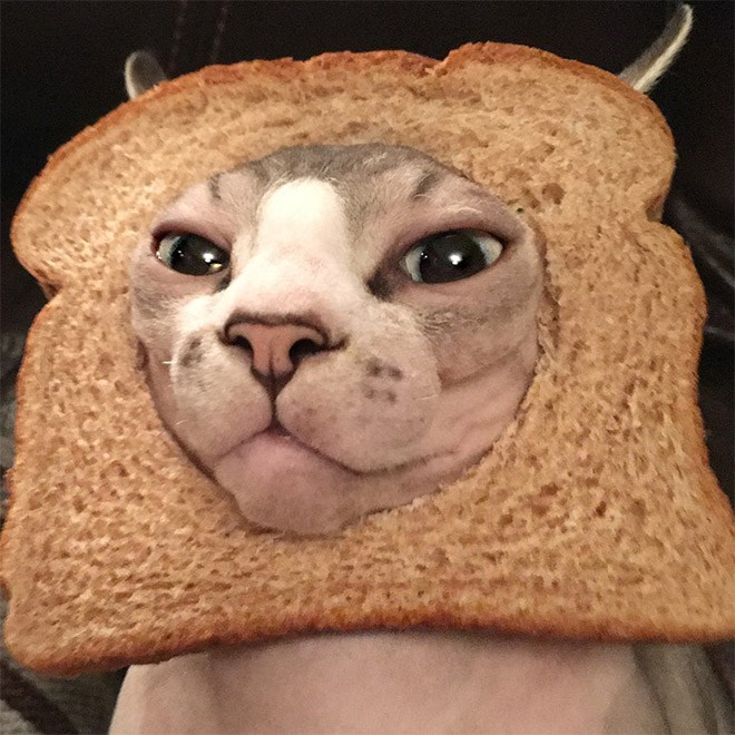 cat with its face put through bread