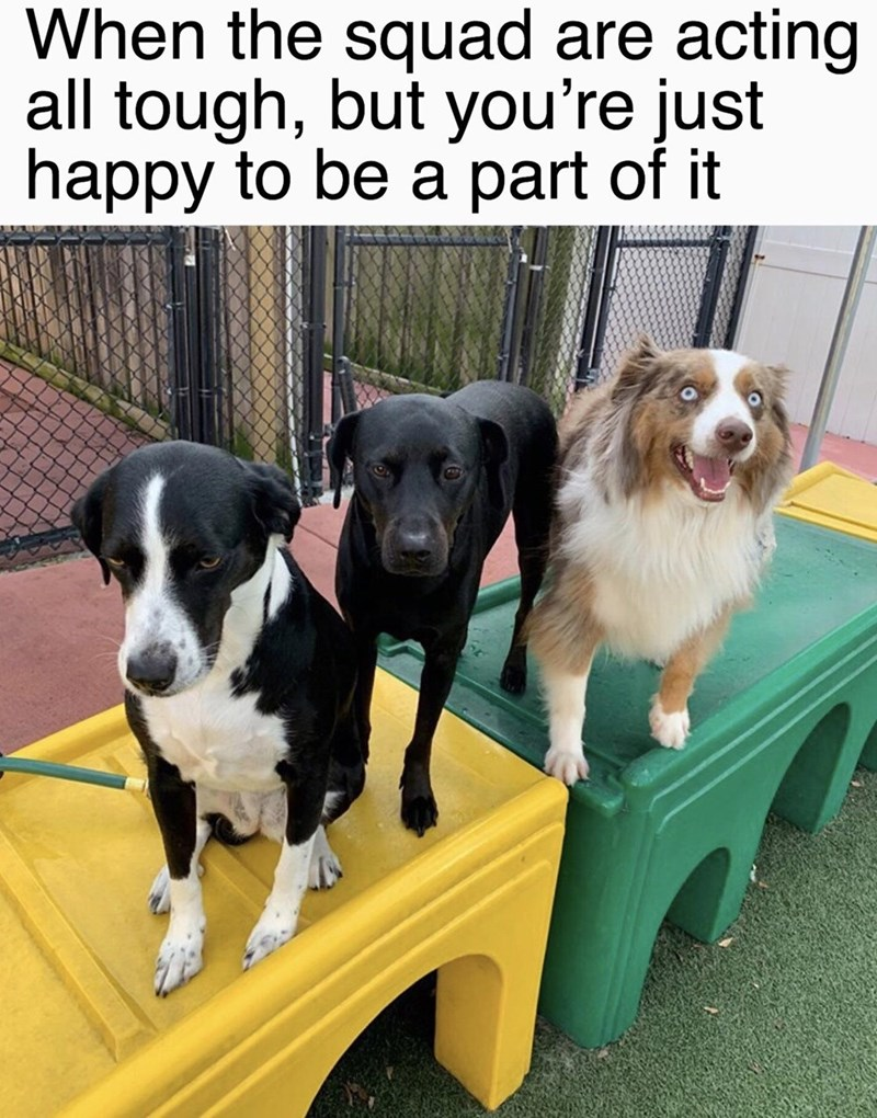 Funny meme of dogs that are just happy to be a part of whatever is going on