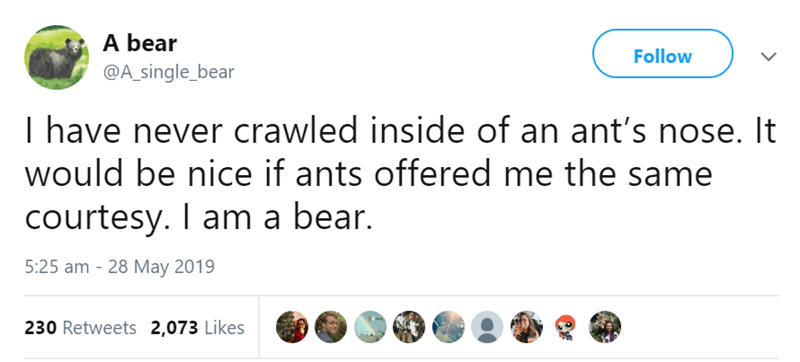 beart tweets - Text - A bear Follow @A_single_bear I have never crawled inside of an ant's nose. It would be nice if ants offered me the same courtesy. I am a bear. 5:25 am 28 May 2019 230 Retweets 2,073 Likes