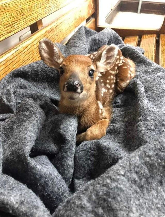 cute animals - Wildlife