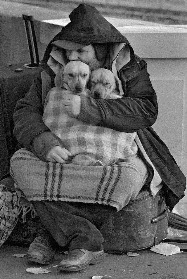 amazing animals photos - pic of homeless man hugging two dogs