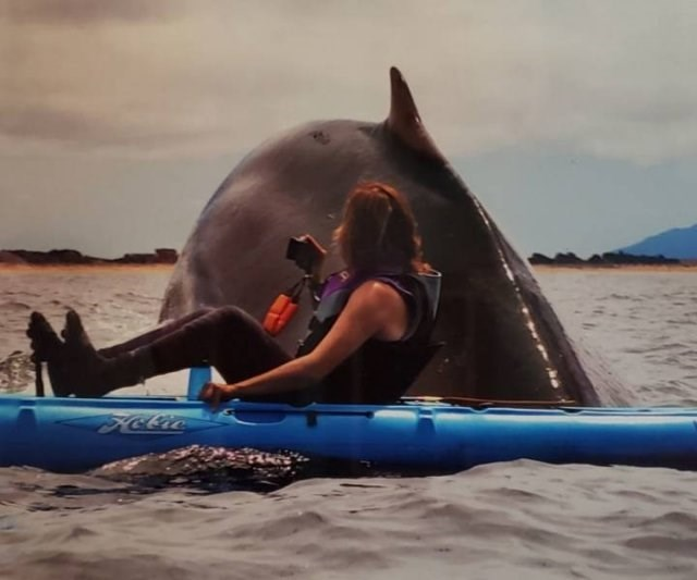 amazing animal photo of whale swimming close to a person on a float