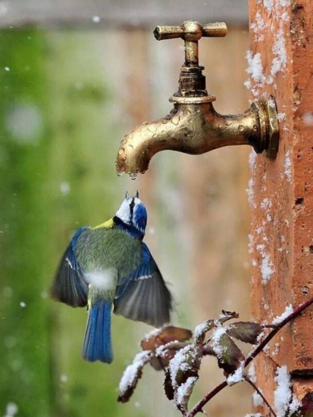 amazing animal photo of small bird drinking from leaking tap