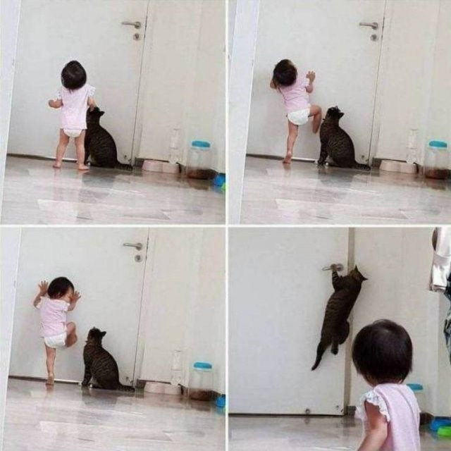 amazing animal photos of cat and baby trying to open a door