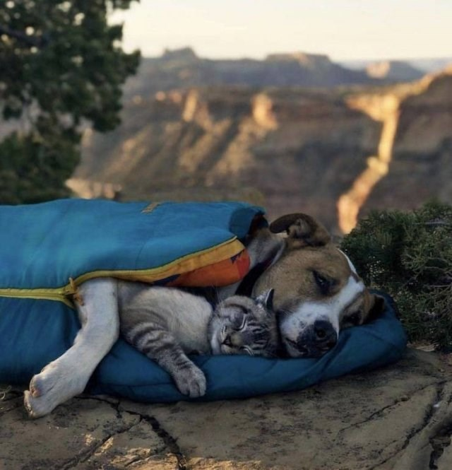 amazing animal photo of cat and dog cuddling in a sleeping bag