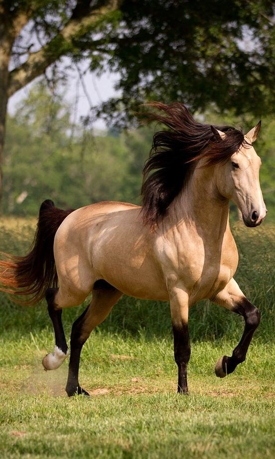 dun Horse trotting with its mane flowing