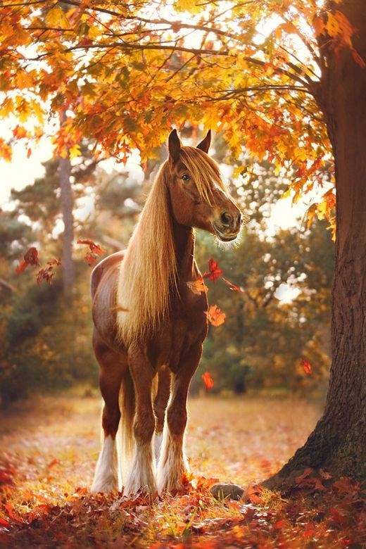 chestnut horse standing under an autumn tree surrounded by red leaves