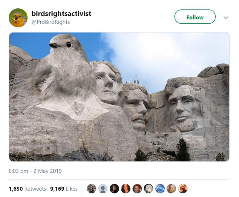 bird tweet