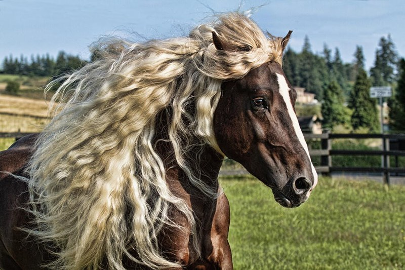 brown horse with a flaxen wavy mane