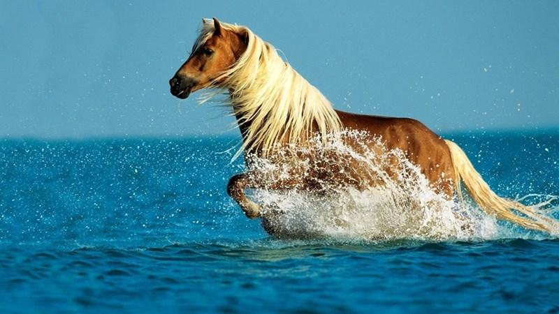 horse running through the ocean water