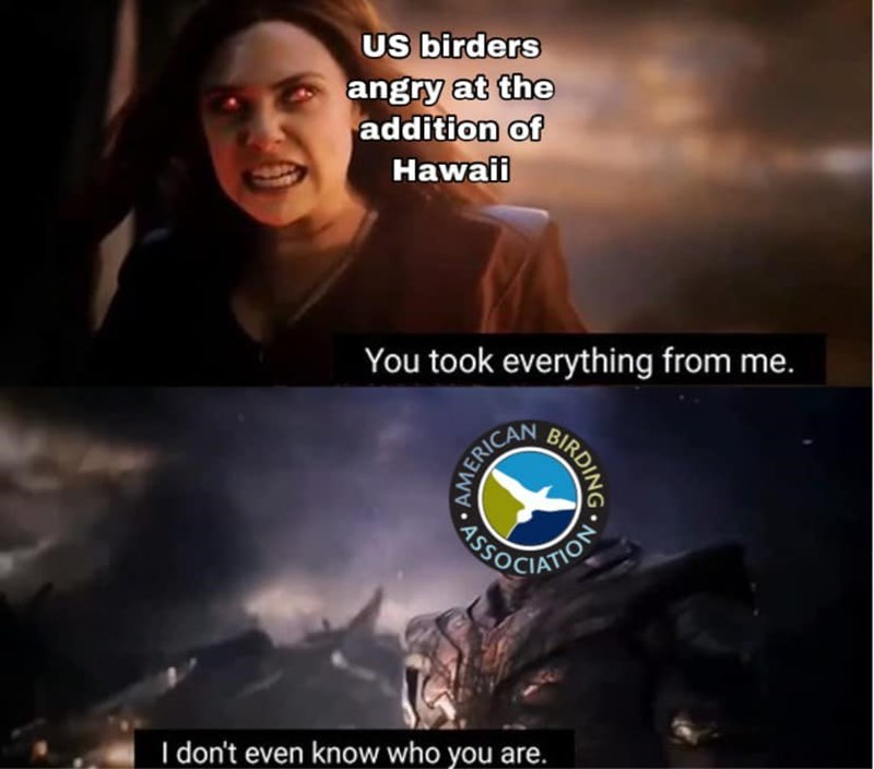 dank - Sky - US birders angry at the addition of Hawaii You took everything from me. AENOCIATION I don't even know who you are. HIRDING