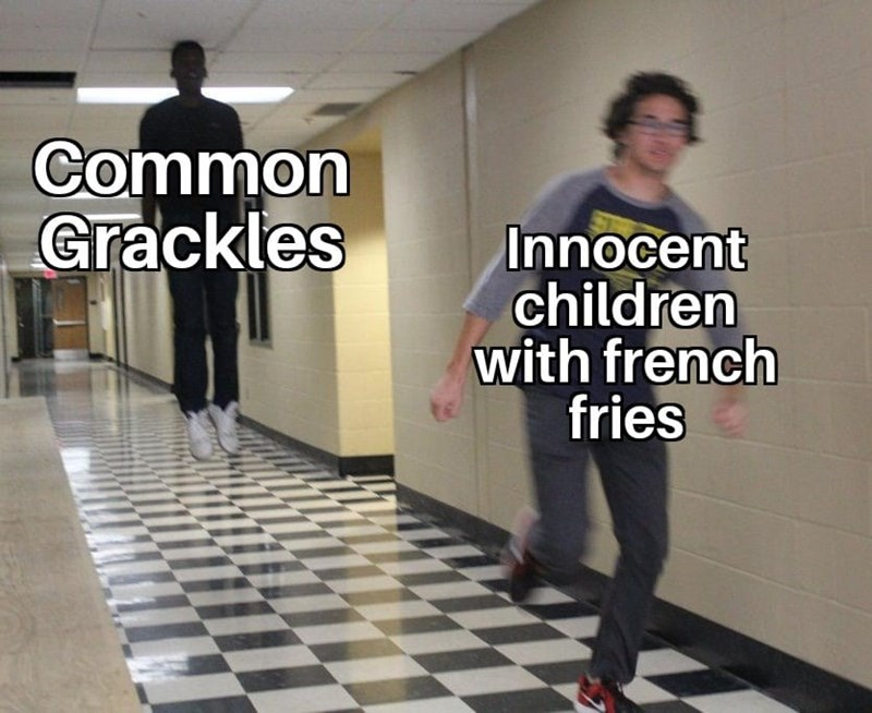 dank - Text - Common Grackles Innocent children with french fries