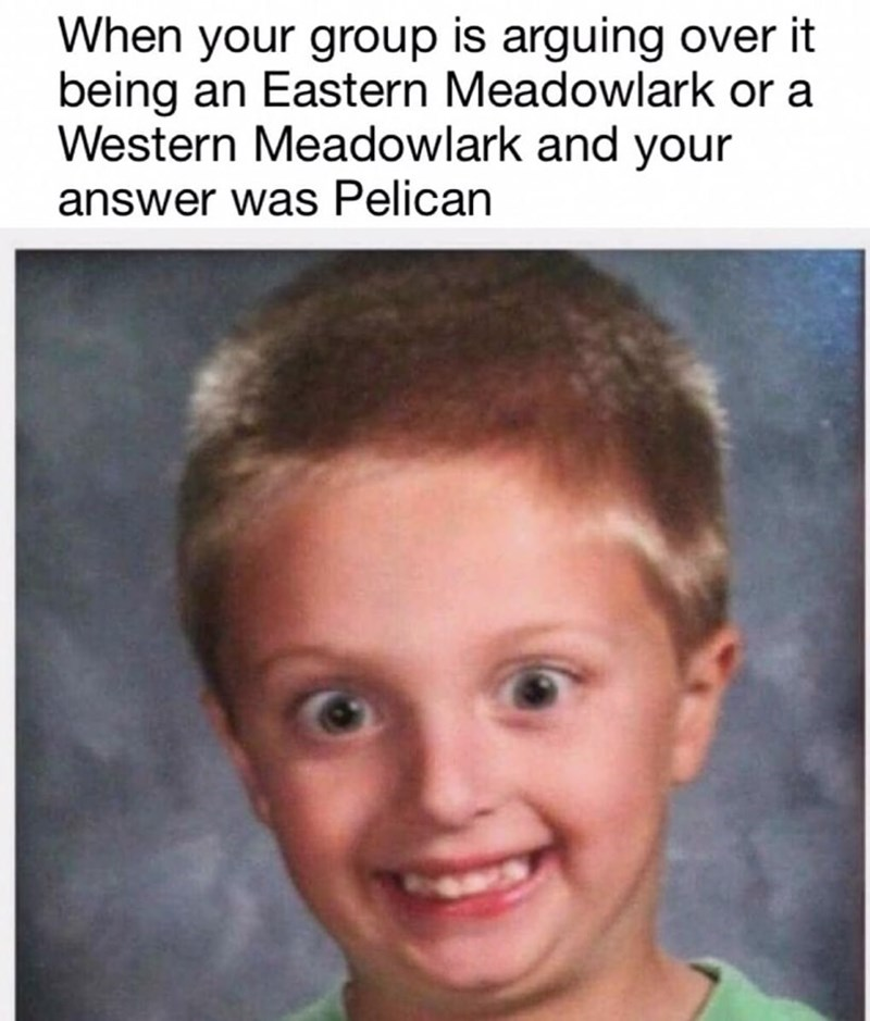 dank - Face - When your group is arguing over it being an Eastern Meadowlark or a Western Meadowlark and your answer was Pelican