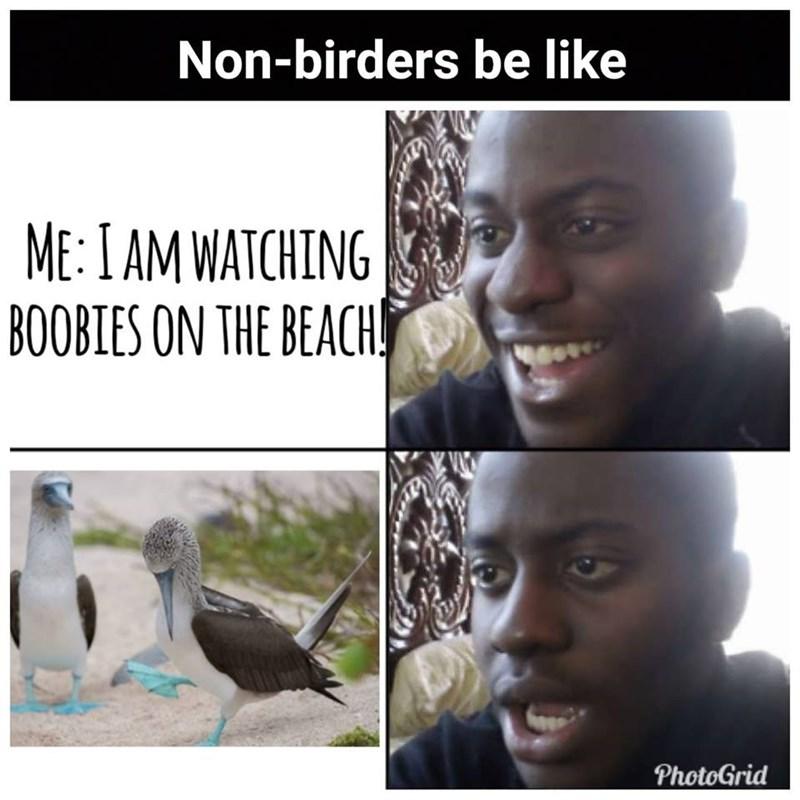 dank - Adaptation - Non-birders be like ME: I AM WATCHING BOOBIES ON THE BEACH PhotoGrid