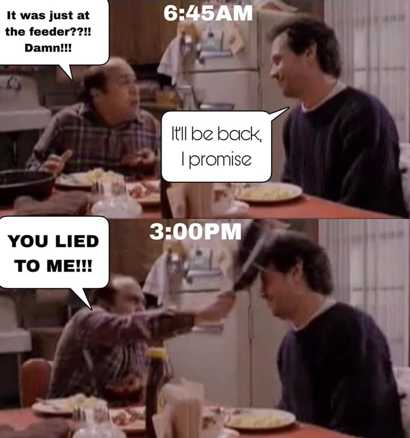 dank - Text - 6:45AM It was just at the feeder??!! Damn!!! Itl be back Ipromise 3:00PM YOU LIED то МЕ!!