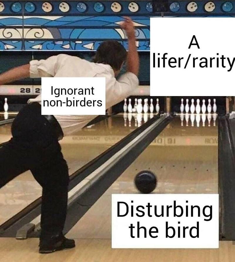 dank - Bowling - A lifer/rarity Ignorant non-birders 28 2 ROA Disturbing the bird