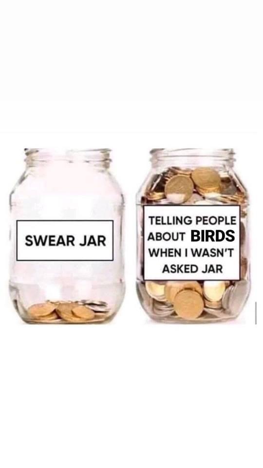 dank - Mason jar - TELLING PEOPLE ABOUT BIRDS WHEN I WASN'T SWEAR JAR ASKED JAR
