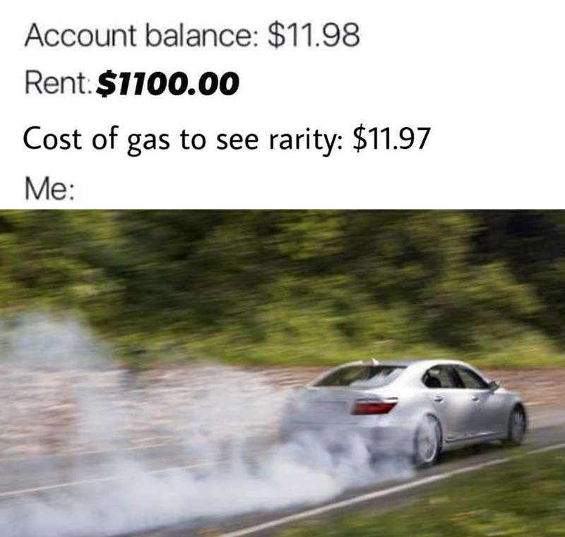dank - Motor vehicle - Account balance: $11.98 Rent.$1100.00 Cost of gas to see rarity: $11.97 Me: