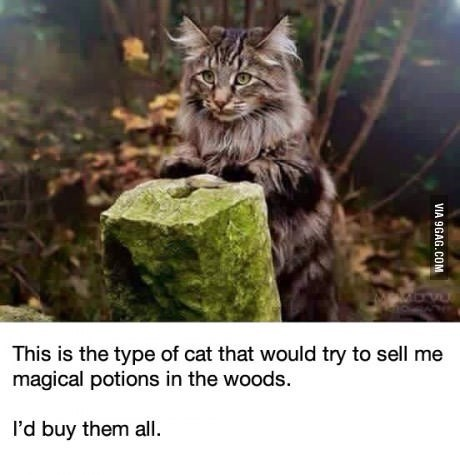 Cat - This is the type of cat that would try to sell me magical potions in the woods. I'd buy them all VIA 9GAG.COM