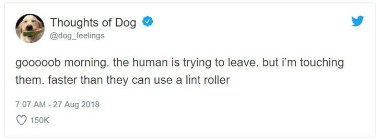 Text - Thoughts of Dog @dog_feelings gooooob morning. the human is trying to leave. but i'm touching them. faster than they can use a lint roller 7:07 AM -27 Aug 2018 150K