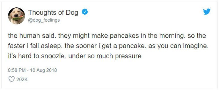 Text - Thoughts of Dog @dog_feelings the human said. they might make pancakes in the morning. so the faster i fall asleep. the sooner i get a pancake. as you can imagine. it's hard to snoozle. under so much pressure 8:58 PM-10 Aug 2018 202K